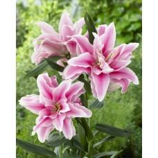 Розовые лилии от 9 штук